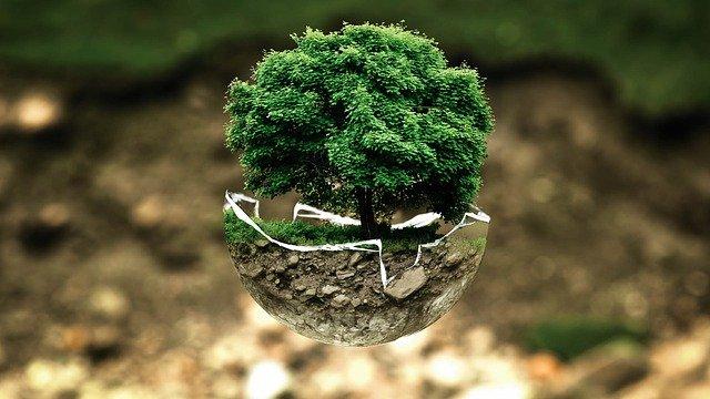 Grafika przedstawiająca drzewo w szkle.